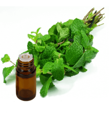 PEPPERMINT Natural Yakima Essential Oil .5 oz