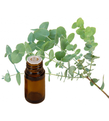 EUCALYPTUS Essential Oil .5 oz